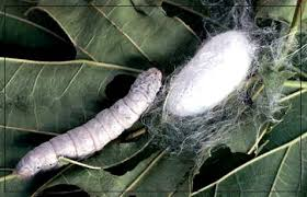 cocoon(1)